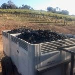 Helm 2019 vintage in Canberra district a surprise after an extreme season