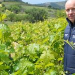 Australia imports Cypriot vines in response to climate change