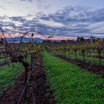 Montara Wines releases new wine range to support 'musicians in crisis'